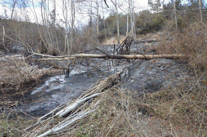 Niksar'da Orman Yangını