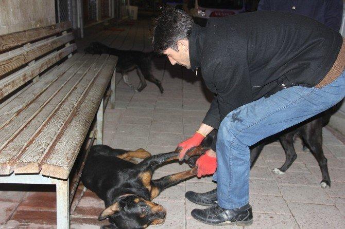Bartın'da Hayvan Katliamı
