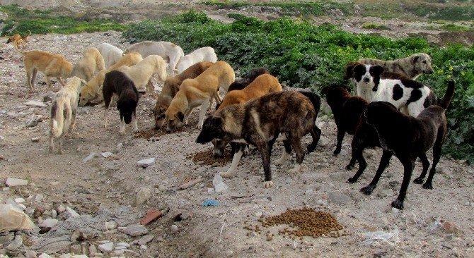 Aç-susuz Kalan Hayvanlara Yardım Eli