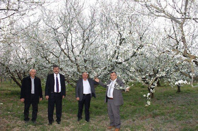 Yalancı Bahar Üreticiyi Korkutuyor