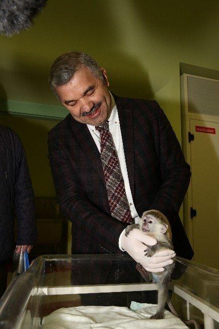 Başkan Çelik Maymun Yavrularını Eliyle Besledi