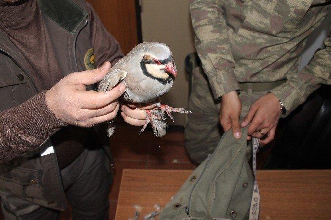 Canlı Mühreyle Kaçak Avlanan Avcıya Para Cezası