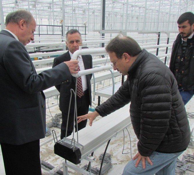 Eskişehir'in İlk Jeotermal Kaynaklı Modern Serası Faaliyete Geçiyor