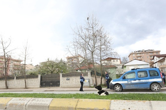 Serdivan Belediyesi Zabıta Ekiplerinden Kurtarma Operasyonu