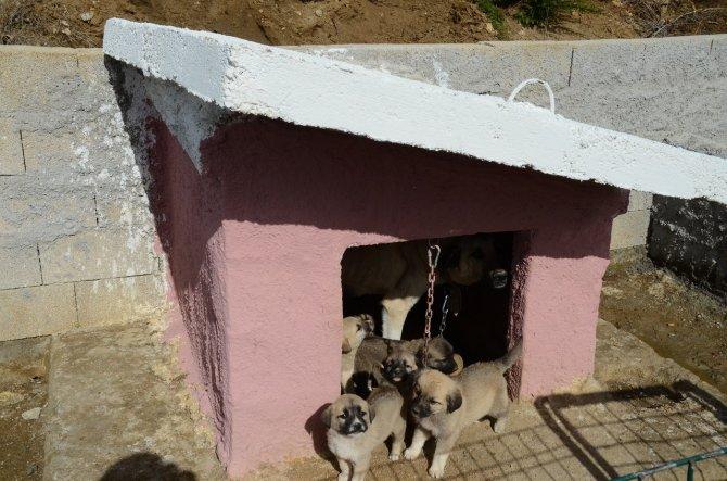 Hayvan barınağındaki her sokak hayvanına bir kulübe