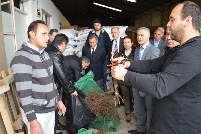 Çiftçilere üzüm fidanı dağıtımı yapıldı
