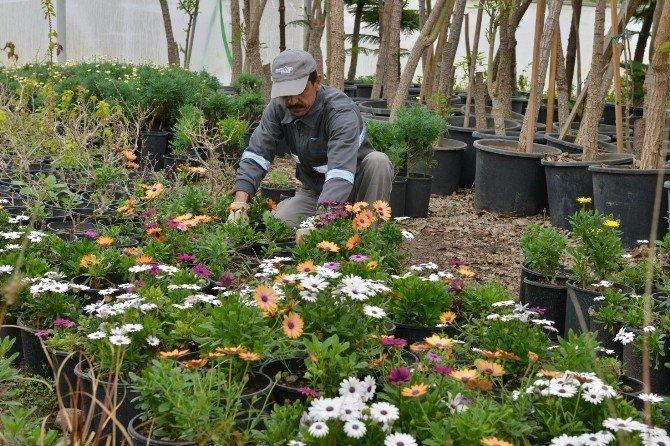 Baharın Renkleri Konyaaltı'nda Açıyor