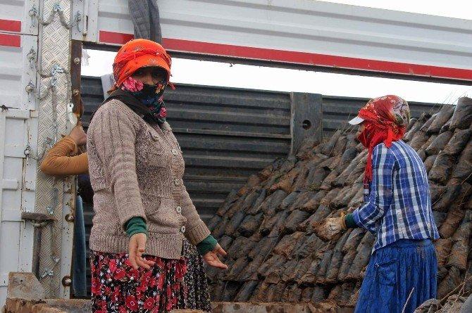 Kadınların Ekmek Mücadelesi