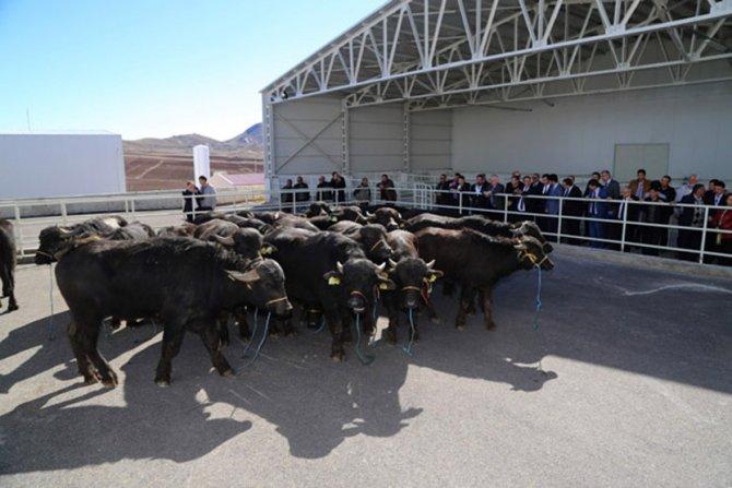 Sivas'ta manda dağıtımı yapıldı