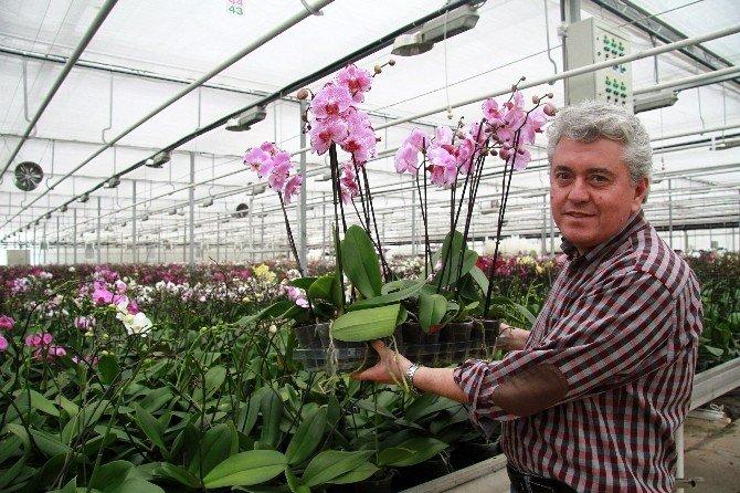 Dünyanın En Narin Bitkisi Kadınlara Emanet