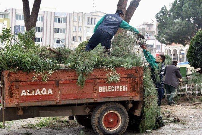 Aliağa'da Ağaçlar Budanıyor