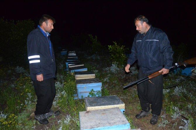 Kovanları çalınan arıcılar 24 saat hırsız nöbeti tutuyor
