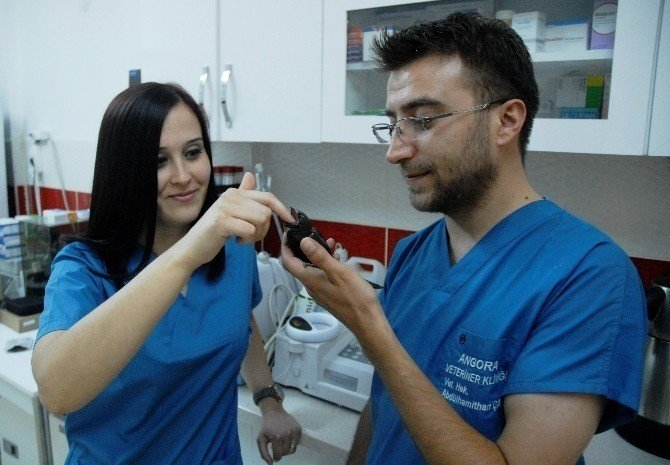 Kadın Gözünden 'Veteriner Hekimliği'