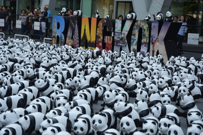 """""""1600 panda"""" Tayland'da"""