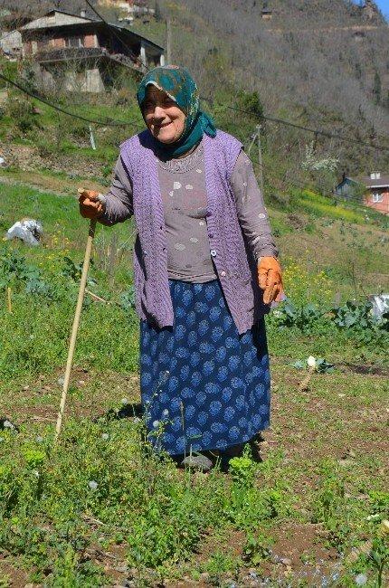 Karadeniz Kadınının Ömrü Tarlada Geçiyor