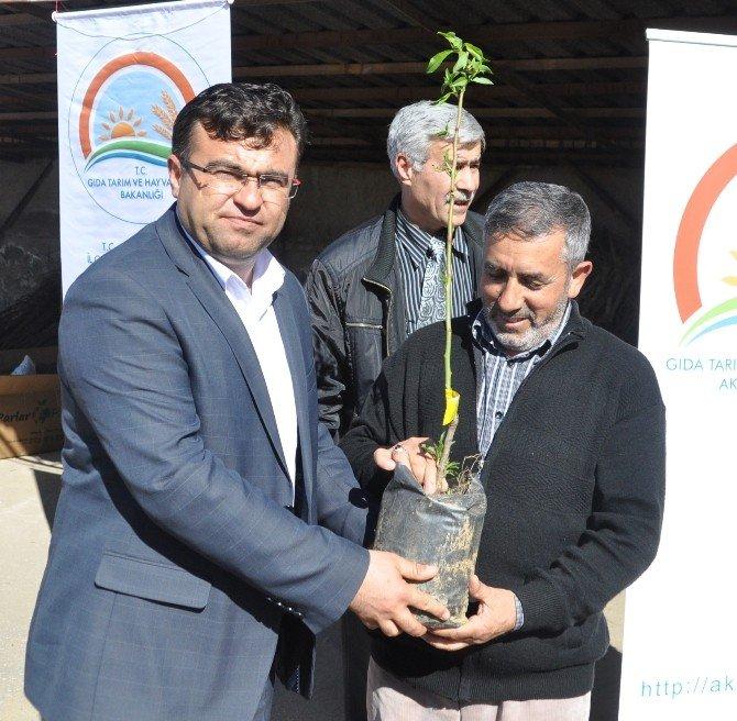 Aksaray'da Çiftçilere 10 Bin 100 Adet Meyve Fidanı Dağıtıldı