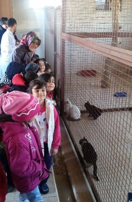 Hayvan Bakım Evi'nin Minik Misafirleri