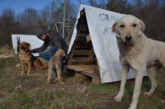 Ölüme terk edilen sokak köpeklerin yardımına koşuyor
