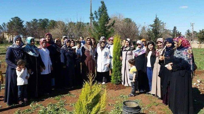 Viranşehirli Kadınlar Okul Bahçesine Ağaç Dikti