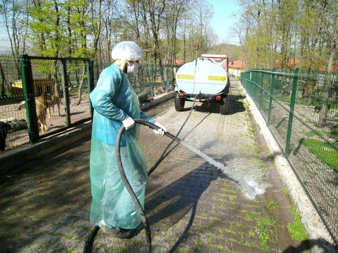 Sokak köpekleri hasta olmasın diye barınak dezenfekte ediliyor