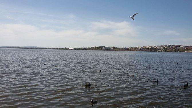 Denizin kızı martılar, Ankara göllerini mesken tuttu