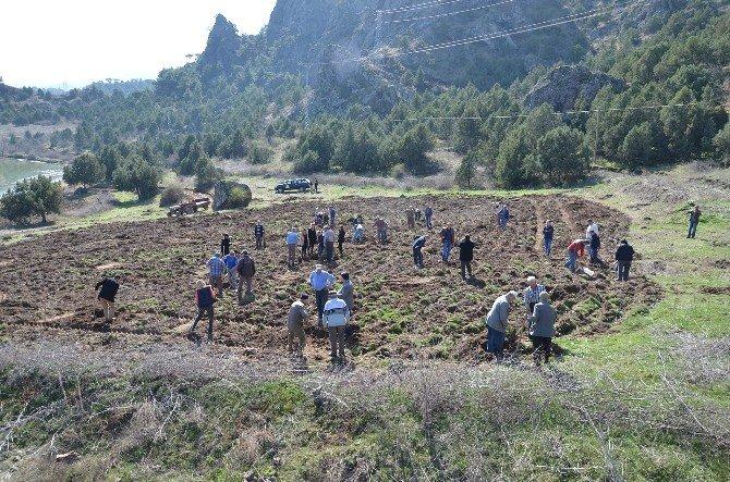 Osmancık'ta 110 Ceviz Fidanı Toprakla Buluştu