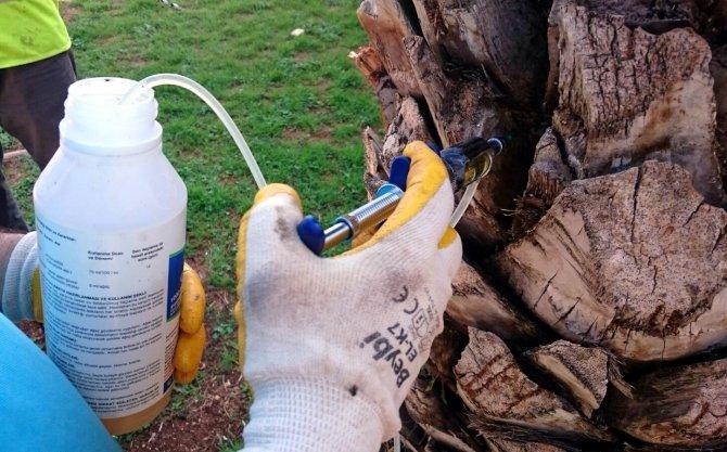 Ağaçlara enjeksiyonlu koruma