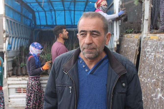 Siirt'in İkinci Büyük Serası Kuruluyor