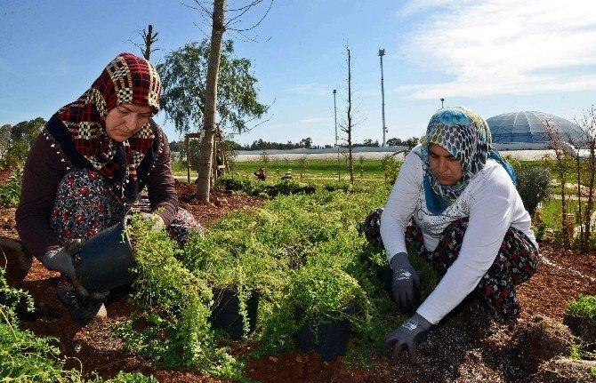 EXPO Tepesine 68 Tür Tıbbi Ve Aromatik Bitki Dikiliyor