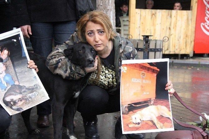 Kozcağız'daki Köpek Katliamına Hayvanseverlerden Tepki