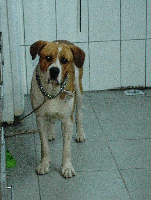 Köpeklerin Saldırdığı Eşeği Hayvan Sever Kadınlar Kurtardı