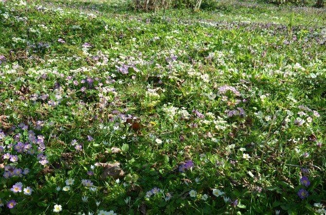 Fındık Bahçeleri Rengarenk