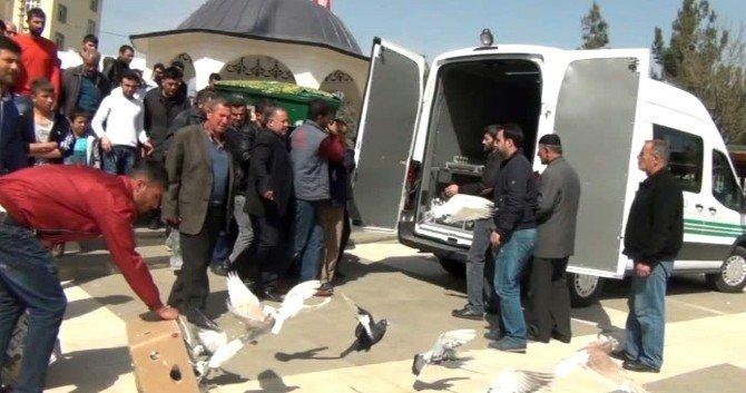 Güvercin Tutkunu Şahsın Cenazesinde, Arkadaşları Güvercin Uçurdu