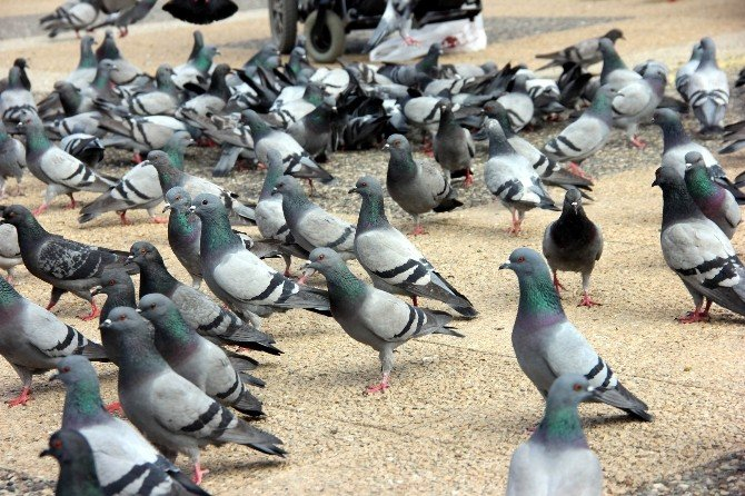 Parkta Güvercin Besleyerek Stres Atıyorlar