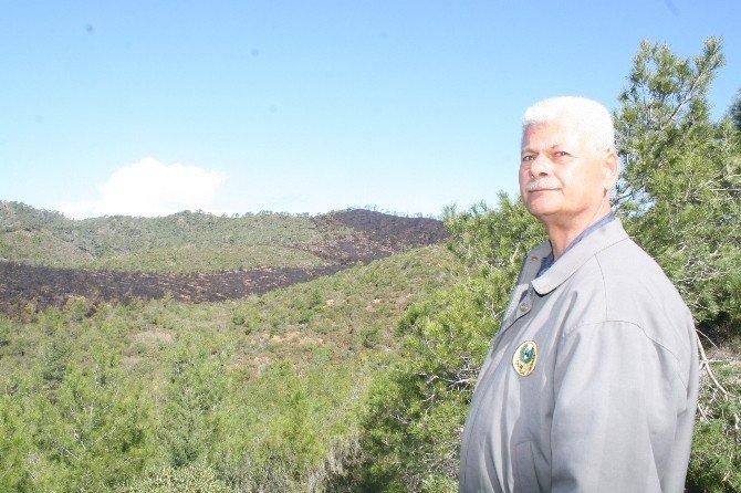 Arıcının Hatası Ormanı Kül Etti