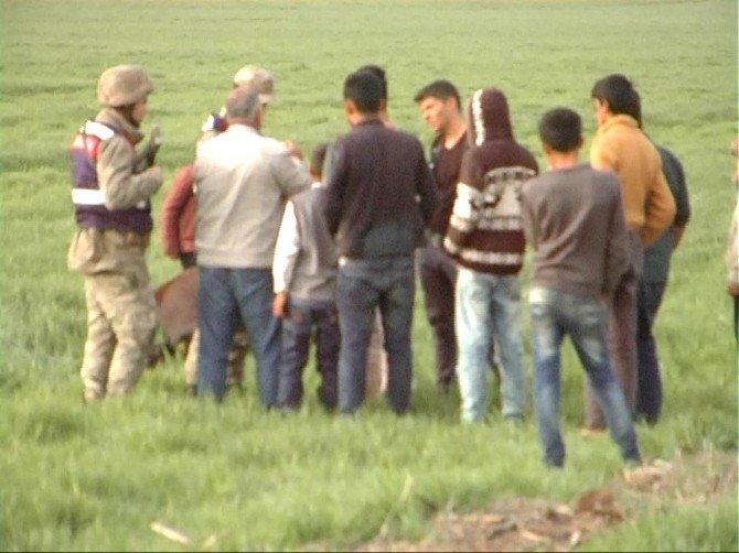 Buğday Ekili Tarlaya Giren AT Vurularak Telef Edildi