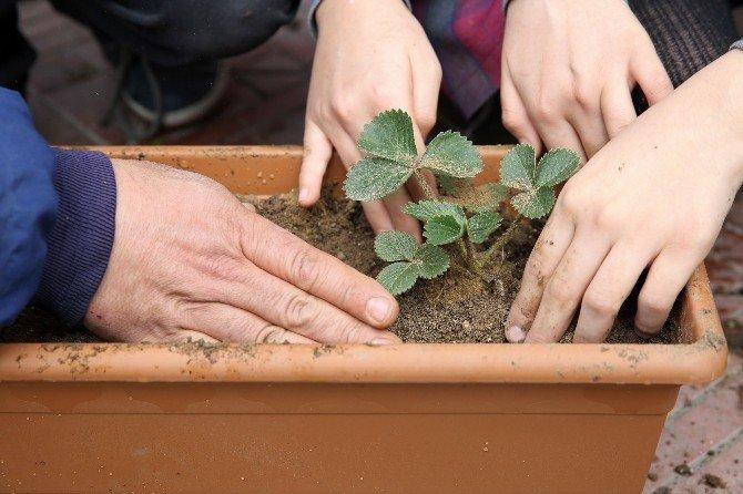 Minik Öğrencilere Organik Tarım Yapma Fırsatı