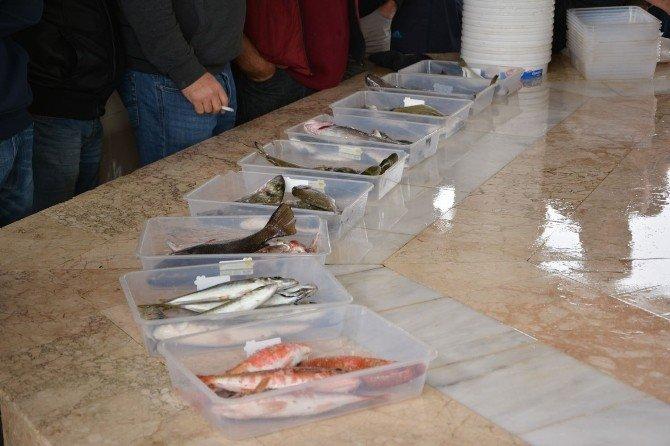 Balık Mezatları Urla'nın Vazgeçilmezi Oldu