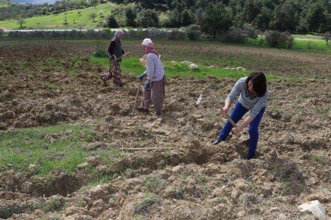 İki Bin Badem Fidanı Toprakla Buluştu