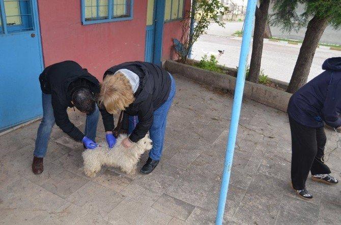 Yalova'da Hayvanlara Kuduz Aşısı