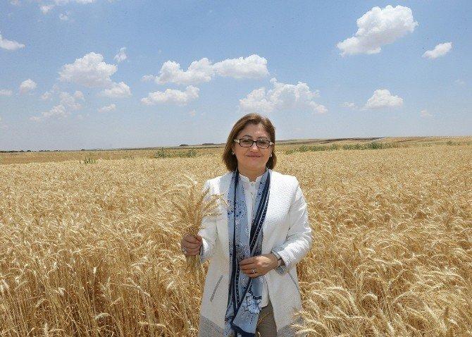 Gaziantep'te Tarımda Kalkınma Hamlesi