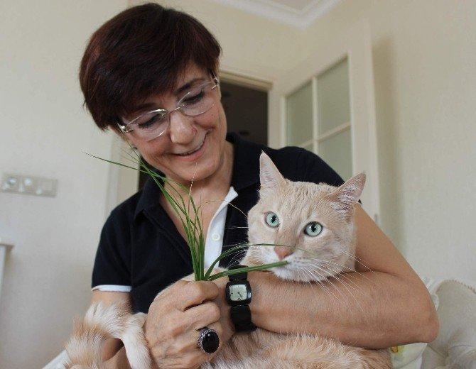 Kedileri İçin Evlerini Terk Edecekler