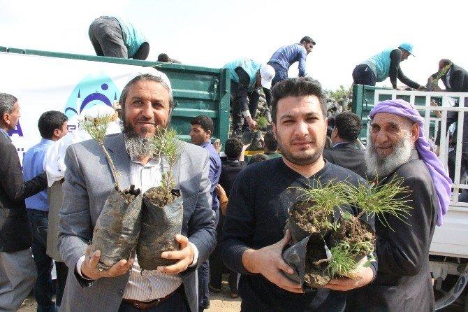 Eyübiye Belediyesi Vatandaşa 10 Bin Adet Çam Fidanı Dağıttı