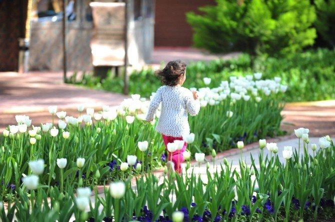 Kepez Kendi Çiçeğini Yetiştiriyor
