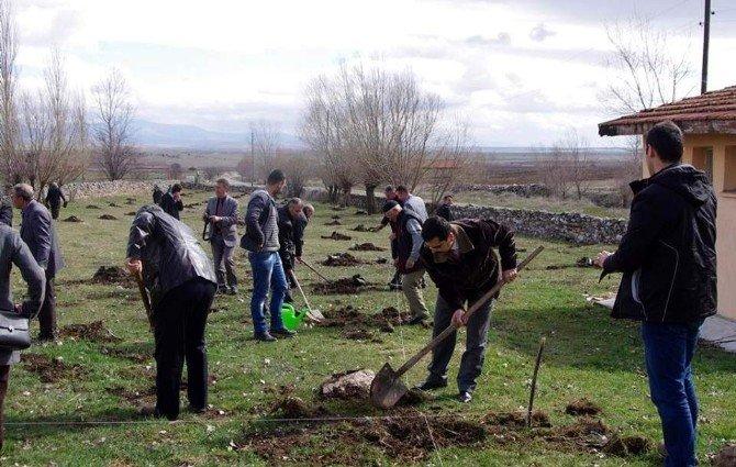 Aslanapa'da Fidanlar Toprakla Buluştu