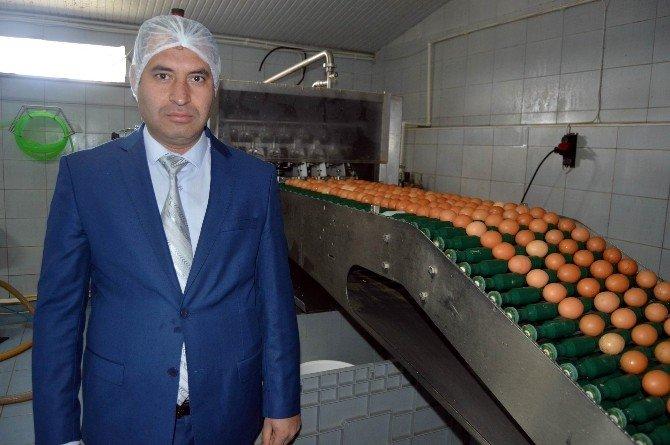 Bu Fabrikada Yumurtanın Akı İle Sarısı Ayrılıyor