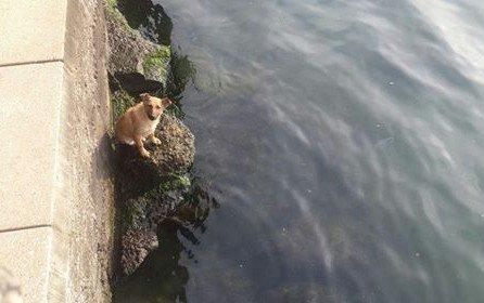 Denize Düşen Köpeği İtfaiye Eri Kurtardı