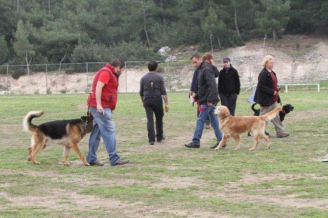 Eğitimli Köpeklerin Hayat Kurtarma Sınavı