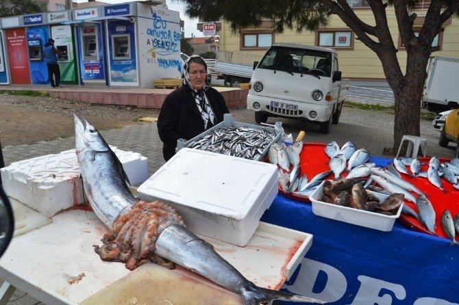 Denizden Çıkan Bereket Balıkçının Yüzünü Güldürdü