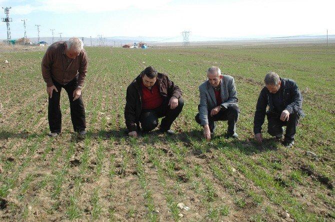 Tarım Sigortasına İlgi Her Geçen Gün Artıyor